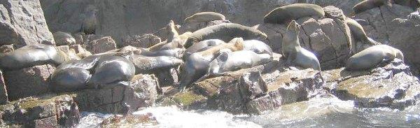 Los Frailes Sea Lions