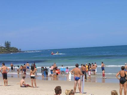 Sunshine coast: shark alert, everyone out!